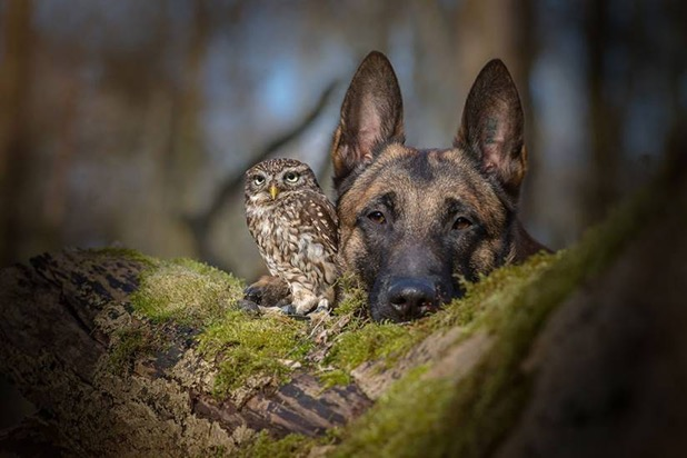 DogOwl1