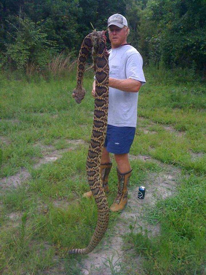 rattlesnake1