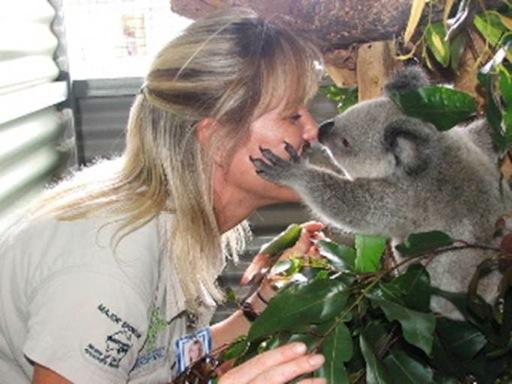 Koala9